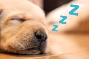 免疫力を高める「睡眠」